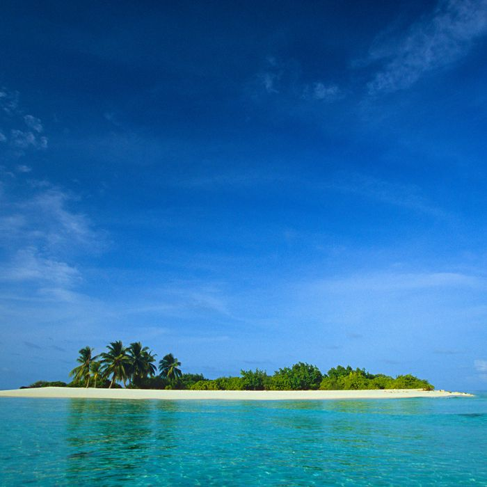 Celebrity Speed Round: What Do You Bring To A Desert Island?