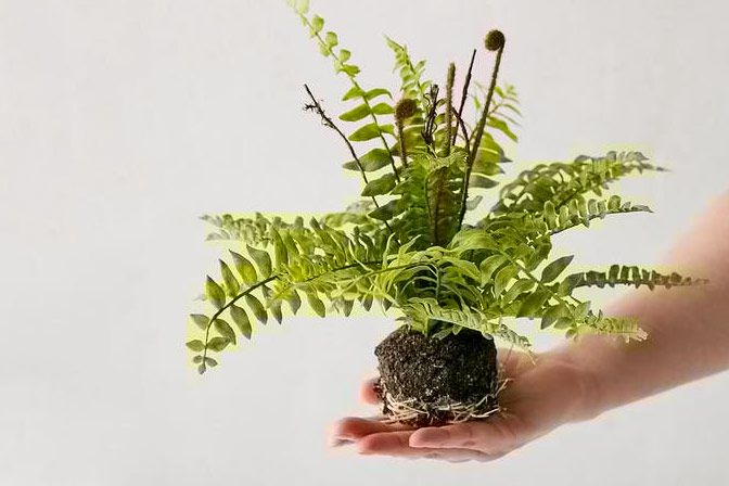 Urban Outfitters Boston Faux Fern