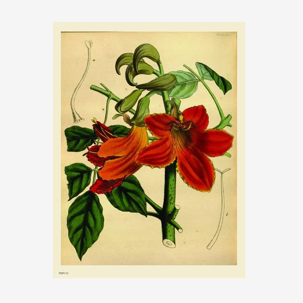 Natural History Botanical 30x40cm Art Poster Print