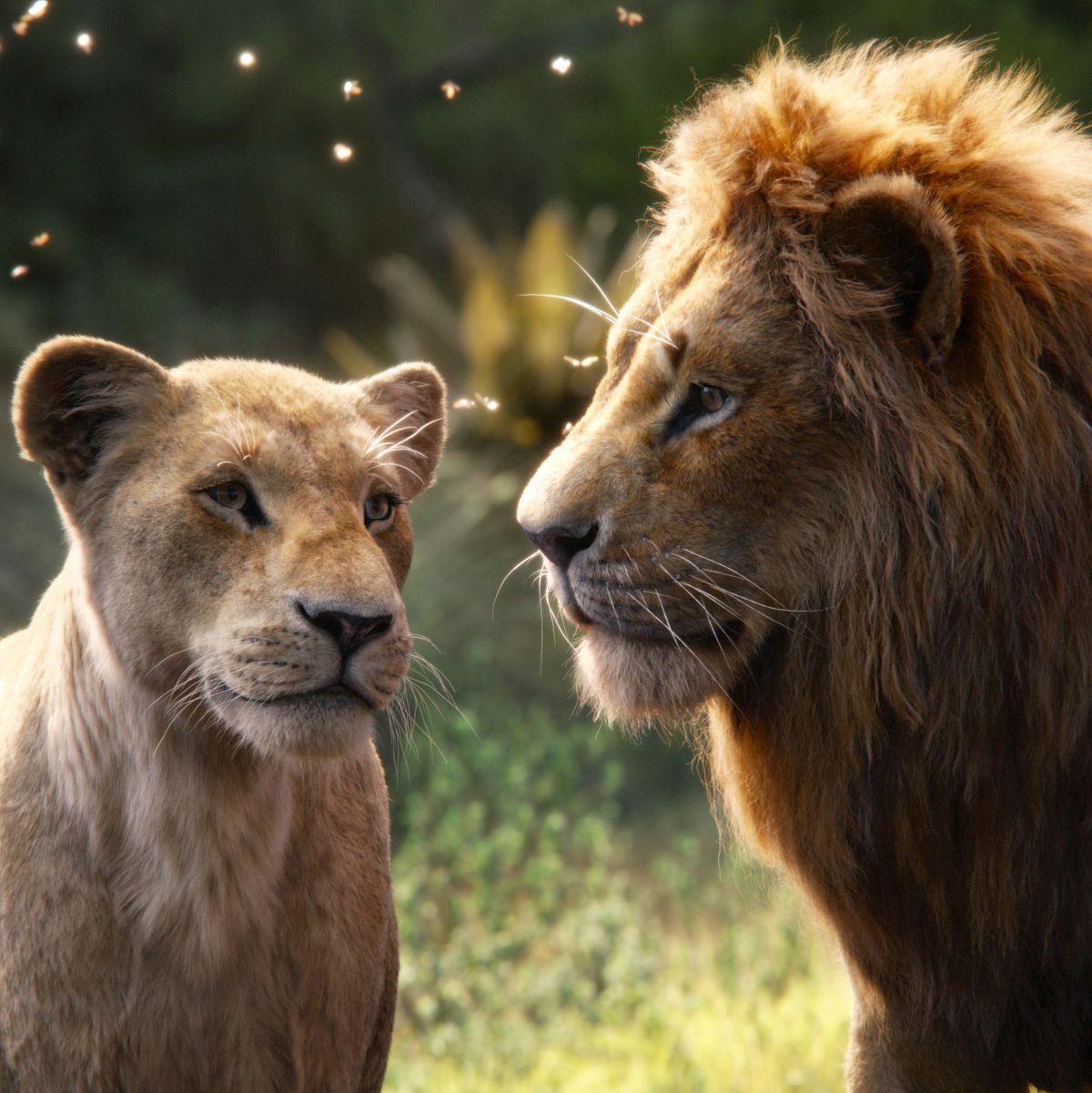 Image result for lion king