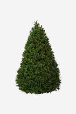 Home Depot 7.5 ft. Freshly Cut Douglas Fir Live Christmas Tree (Real, Natural, Oregon-Grown)
