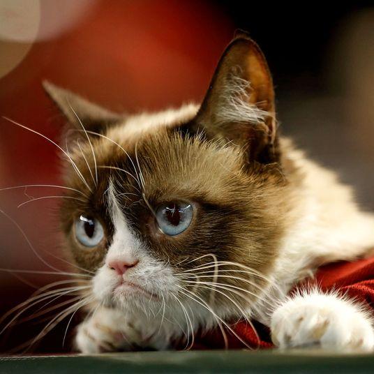 Was Grumpy Cat's Fame Built on a Stolen Kate Beaton Joke?