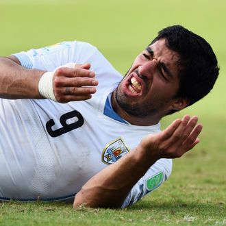 Luis Suarez of Uruguay reacts after a clash during the 2014 FIFA World Cup Brazil Group D match between Italy and Uruguay at Estadio das Dunas on June 24, 2014 in Natal, Brazil.