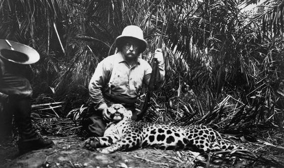ca. 1900s --- Theodore Roosevelt holds a leopard he killed on an African safari. --- Image by © CORBIS