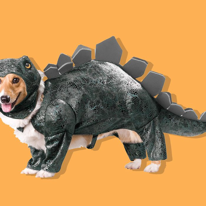 d925560c2 The 10 Best Dog Costumes on Amazon, According to Hyperenthusiastic Reviewers