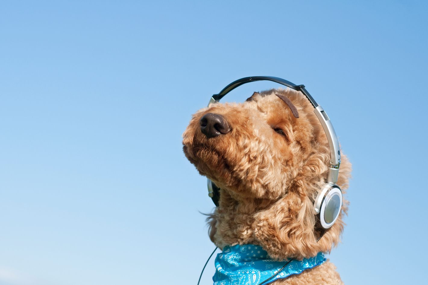 reggae music helps dogs relax science of us