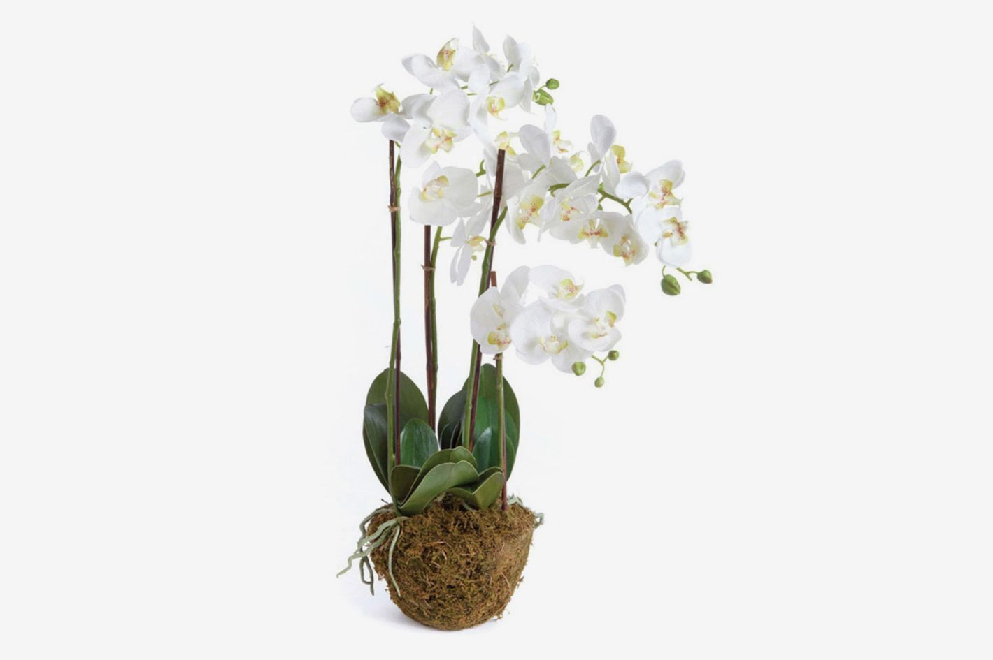 "Napa Home and Garden Phalaenopsis 30"" Drop-In Silk Plant"