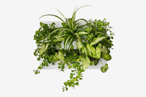 Ortis Green Vertical Garden