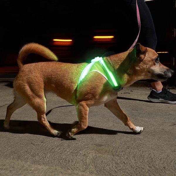 Harnais pour chien lumineux et réfléchissant Noxgear LightHound