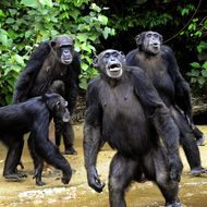 LIBERIA-ANIMAL-BIOTECHNOLOGY