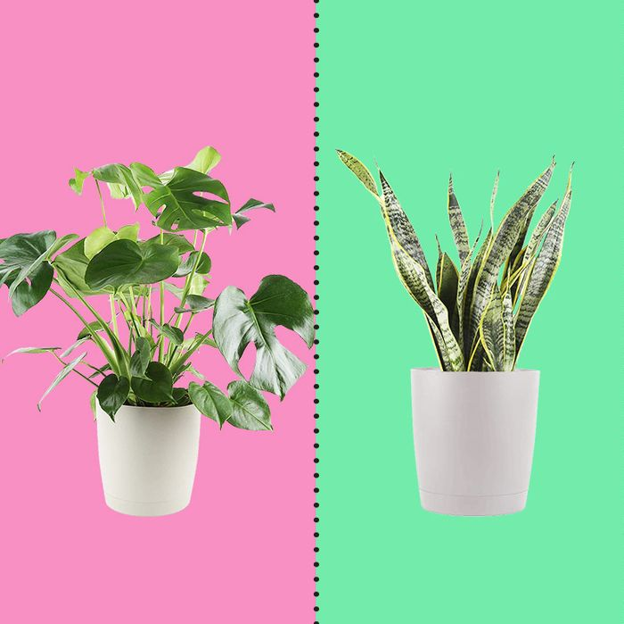 Three potted plants against pastel rainbow backdrop