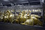 French Foie Gras Spokesperson: 'Maybe We Did Go a Little Too Far'