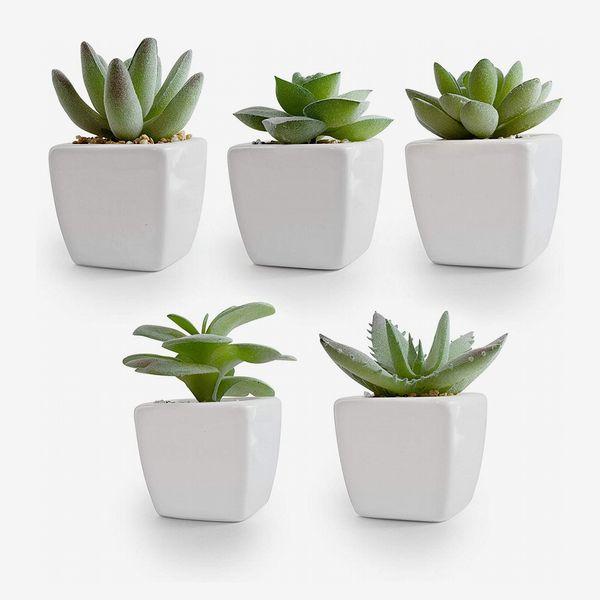 Korvea Set of 5 Artificial Succulent Plants