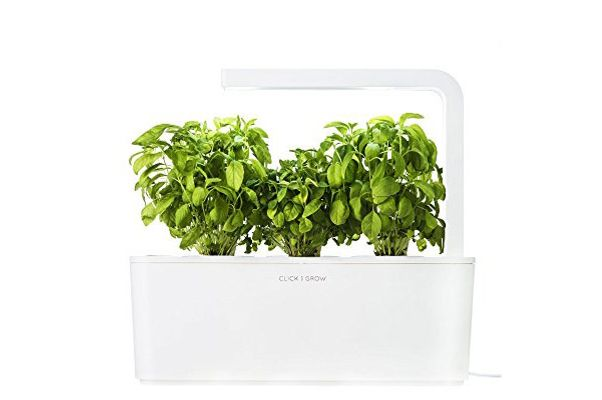 Click & Grow Herb Garden Kit