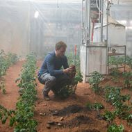 Scientists Pretty Sure Humans Could Eat Food Grown in Martian Soil