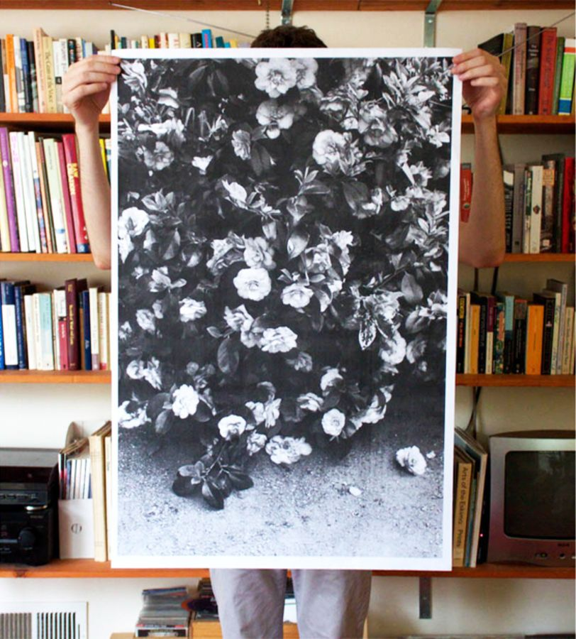 Debbie Carlos Flowers Poster