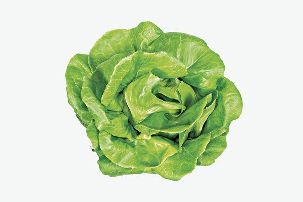 Lettuce Grow Rex Butter Lettuce