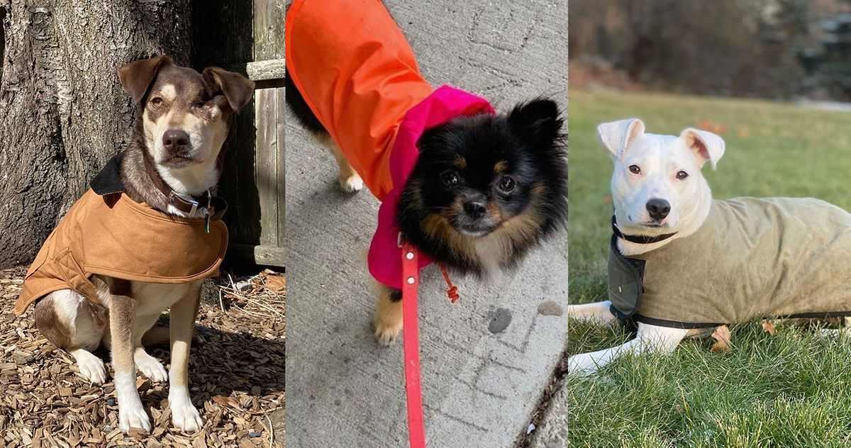 15 Best Dog Jackets And Coats 2021, Best Winter Dog Coat Uk