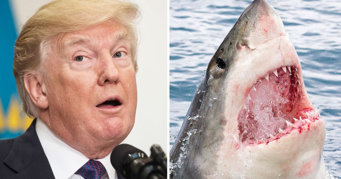 Trump Fears Sharks Because He'll Believe Anything TV Tells Him