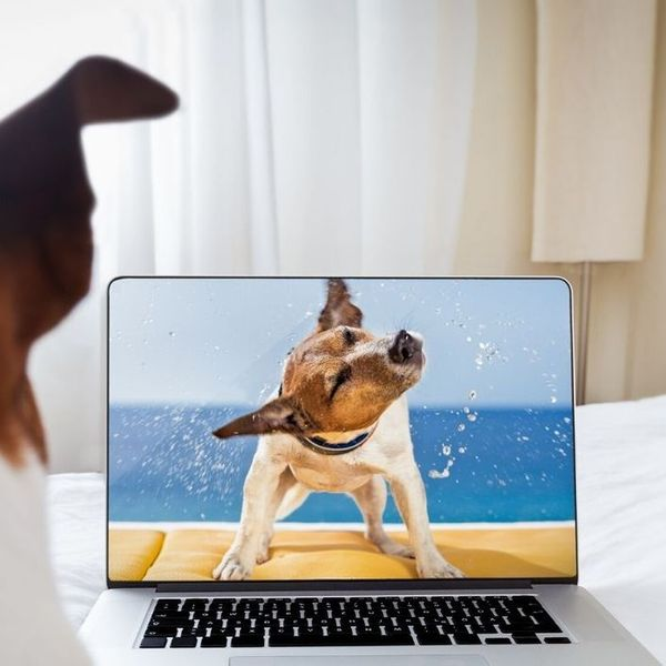 Online Dog Training University Introduction to Scent Work Course