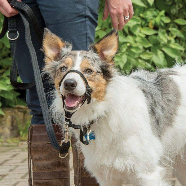 Halti Dog Headcollar
