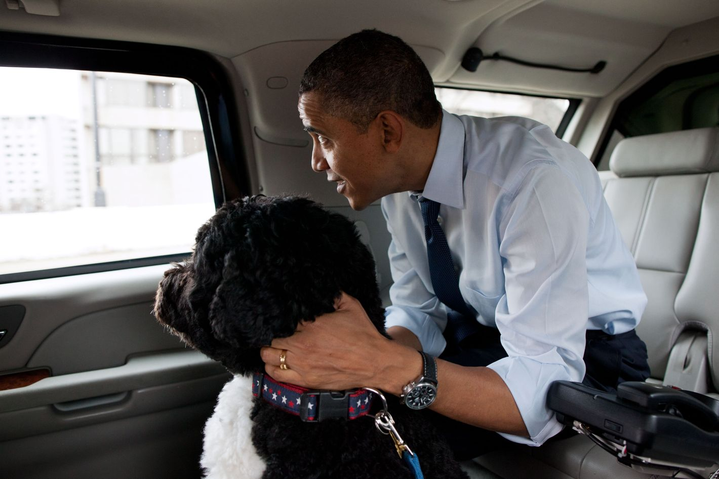 """The President and Bo, the Obama family dog, ride in the presidential motorcade en route to PetSmart in Alexandria, Va. The President bought Bo some Christmas gifts at the pet store then walked nearby to Best Buy to purchase gifts for his daughters."