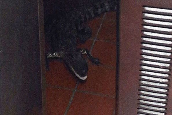 Some Dude Threw an Alligator Into a Wendy's Drive-Through