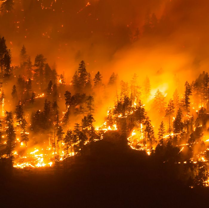 A wildfire.