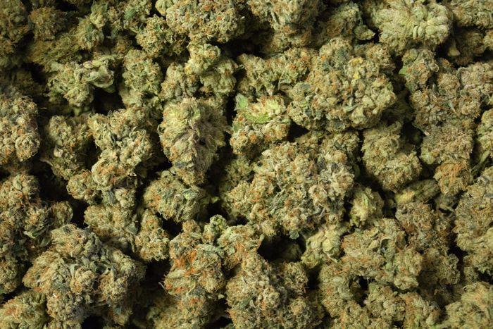 a close-up shot of cannabis