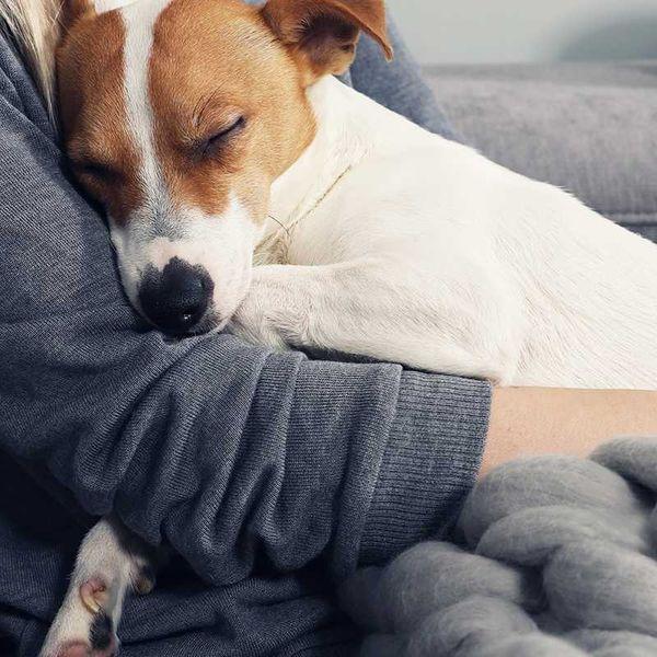 Assurance pour animaux de compagnie Petplan