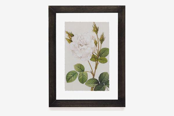 Vintage White Rose Floating Black Frame by Drew Barrymore Flower Home