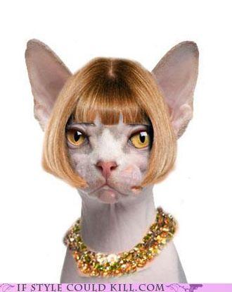 Anna in feline form.