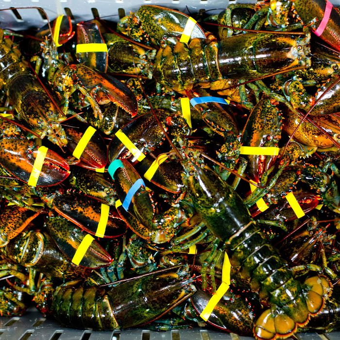 Alleged Lobster Embezzlement Is Most New England Crime Ever