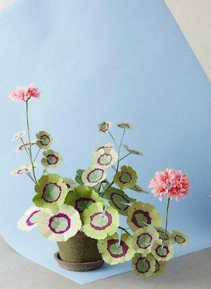 The Green Vase Geranium Plant