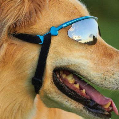 ee4791bbe28 Here is a delightful fact to help you make it through today  There is a  company called Doggles that makes prescription eyeglasses for dogs and cats.
