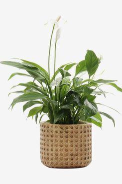 SAROSORA Ceramic Flower Pots Cement Succulent Planter