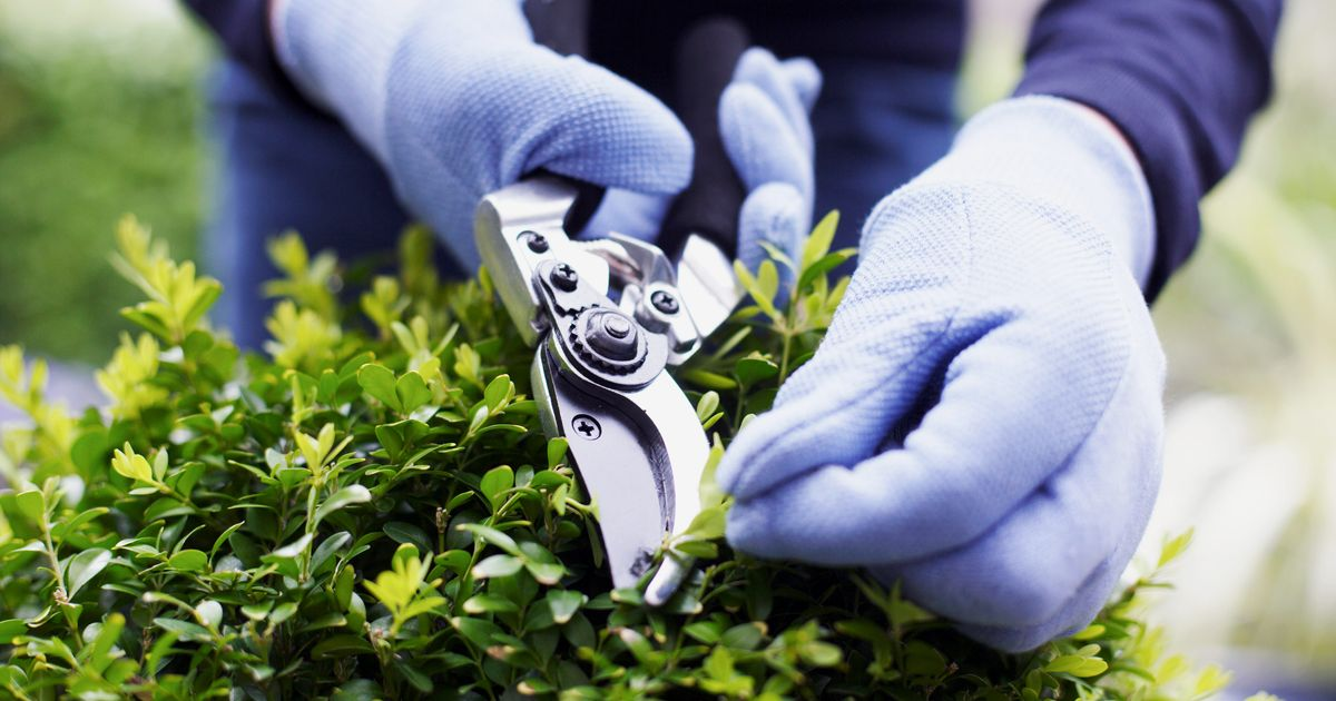 The Best Garden Shears and Pruners, According to Experts
