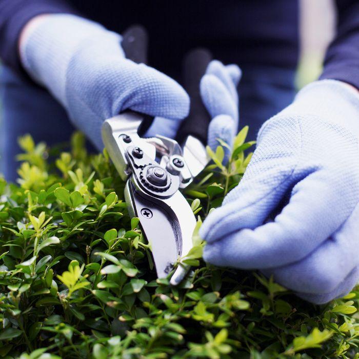 11 Best Garden Shears And Pruners 2019
