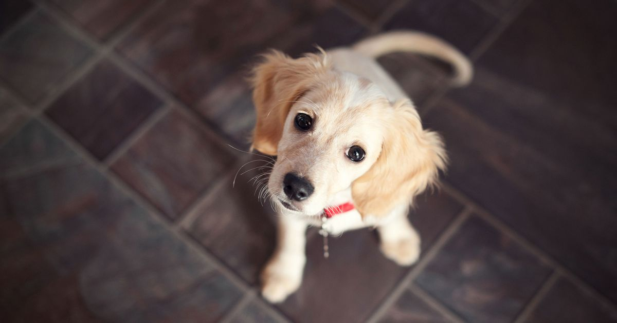 Everything You Need to Know About Adopting a Rescue Dog