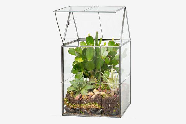 Deco Glass Terrarium, Succulent & Air Plant (Hinged)