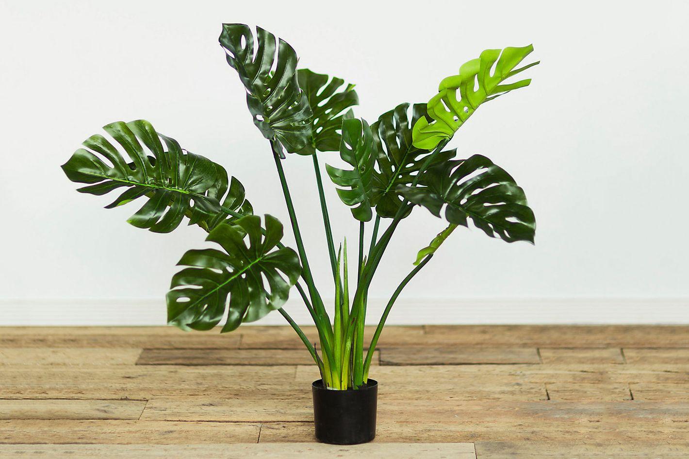 Terrain Faux Philodendron