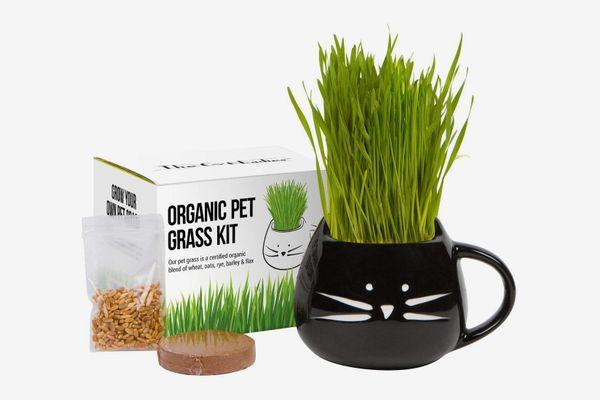 Organic Cat Grass Growing Kit
