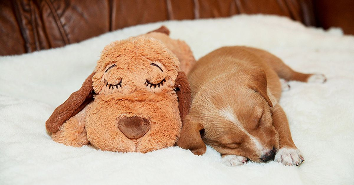 The Essential (and Affordable) Gear You'll Need to Puppy-Proof Your Home