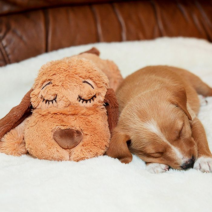 A stuffed dog toy for new puppies, as part of a list of gear needed for new dog owners — The Strategist reviews.