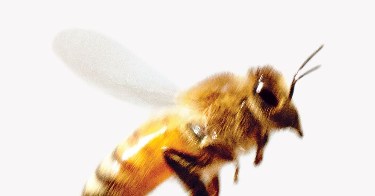 428b6d3d51 Bees Are Literally Worrying Themselves to Death -- NYMag
