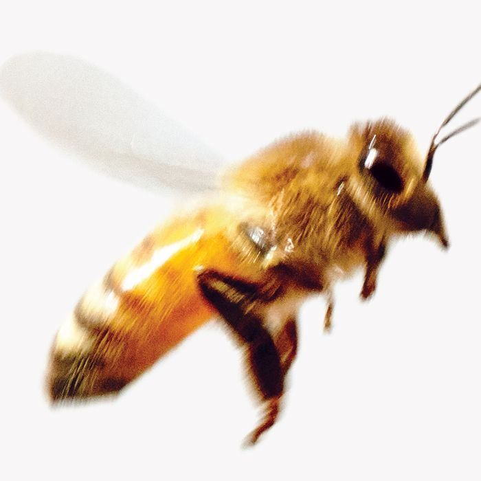 It Turns Out Bees Are Quite Literally Worrying Themselves To Death