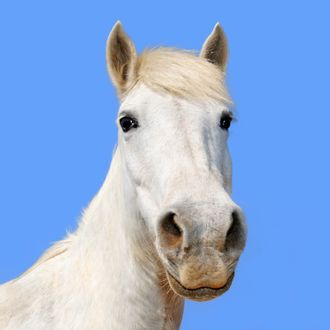 Camargue horse under clear blue sky, close-up
