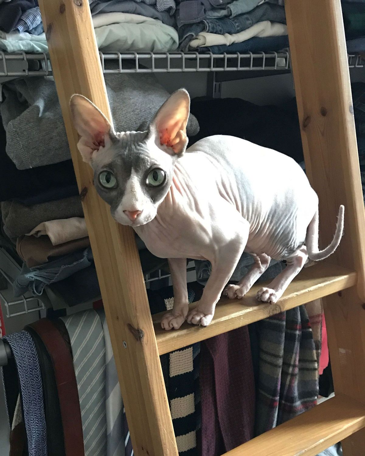 How To Care For A Hairless Cat Sphynx Care 2020 The Strategist New York Magazine