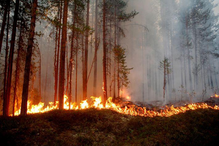 TALAS VRUĆINE NA SJEVERU EVROPE: Skandinavija bukvalno gori na plus 30