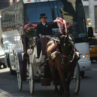 NEW YORK, NY - APRIL 21: A carriage horse and driver travel down the street near Central Park on April 21, 2014 in New York City. New York Mayor Bill de Blasio, a Democrat, made a campaign pledge to ban carriages in Central Park. As the horse carriage industry, which mainly takes tourists through the park, has come under criticism from animal welfare agencies, many New Yorkers are voicing their support for the horses and drivers. On Saturday animal welfare activists protested in front of actor Liam Neeson's home after he wrote a newspaper piece in support of the carriage horses.  (Photo by Spencer Platt/Getty Images)